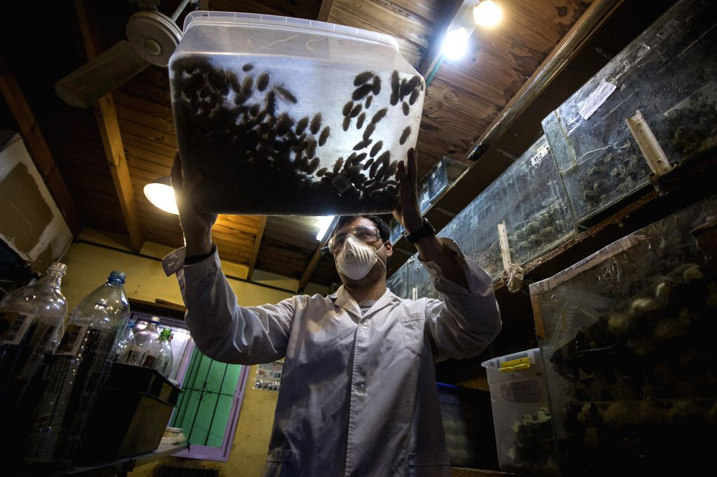 Buenos Aires (Argentina): Matias Olmos, student of biological sciences, moves a box with cockroaches in the insect hatchery of biologist Daniel Caporaletti, in Buenos Aires city, capital of ...