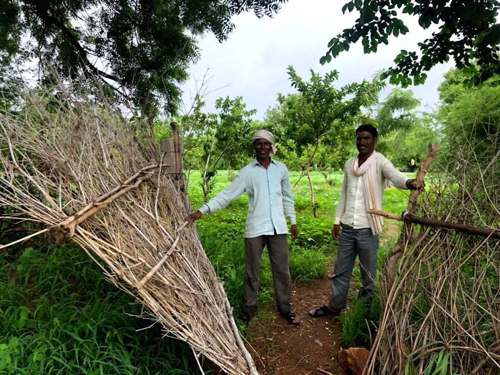 Bundelkhand: Lush green fields, orchards of guava trees with branches laden with fruit, rows of groundnut shrubs, vegetables --  Parasai-Sindh region of Bundelkhand is a picture of plenty. But it wasn't always like this. The transformation of what wa