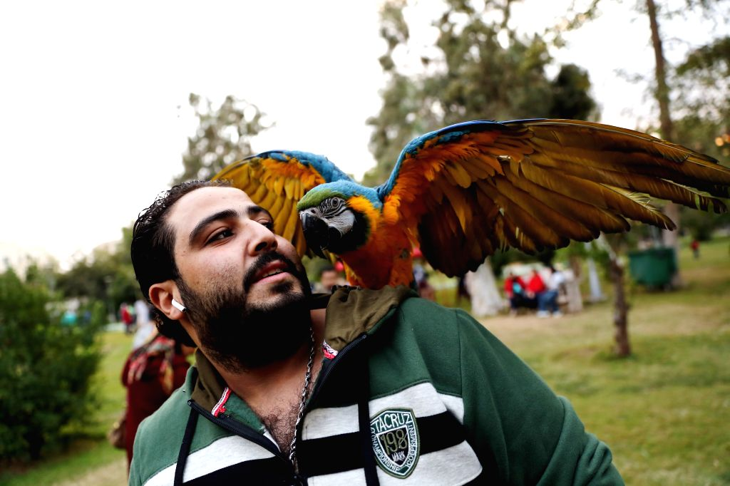 CAIRO, Dec. 7, 2019 - A parrot is seen during a pet carnival in Cairo, Egypt, on Dec. 6, 2019. Held at the garden of Cairo's Child Center for Civilization and Creativity, Aleef 4th Open Air Pets ...