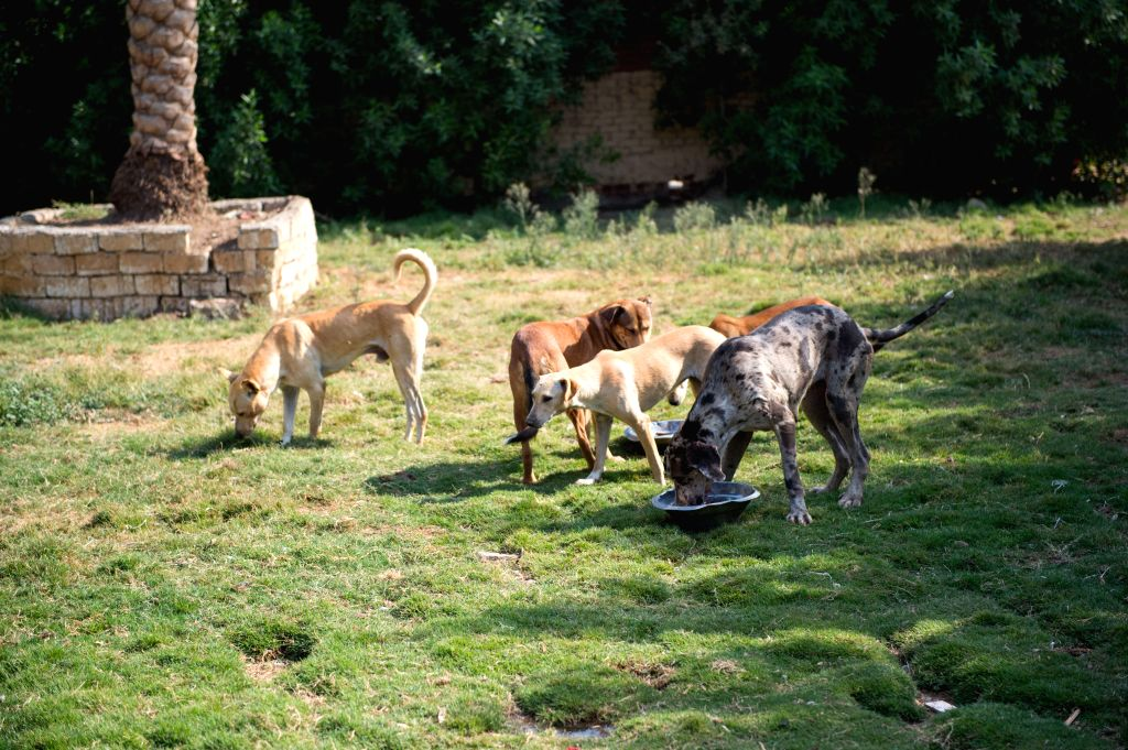 CAIRO, Oct. 4, 2016 - Dogs are seen at the HOPE Society in Giza governorate, Egypt, Oct. 2, 2016. Amid the green farms of Giza governorate in Egypt, stray and abandoned dogs can have a safe haven at ...