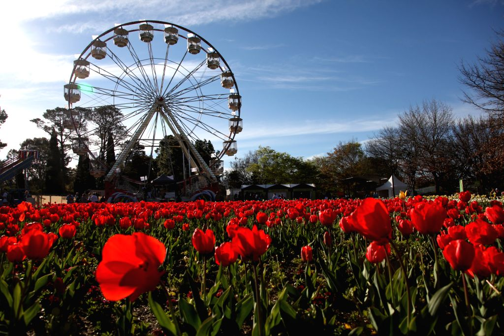 CANBERRA, Sept. 29, 2016 - Photo taken on Sept. 28, 2016 shows blossoming flowers on the Floriade 2016 at Canberra's Commonwealth Park, Australia. This year's Floriade, the 29th of its kind, opens ...