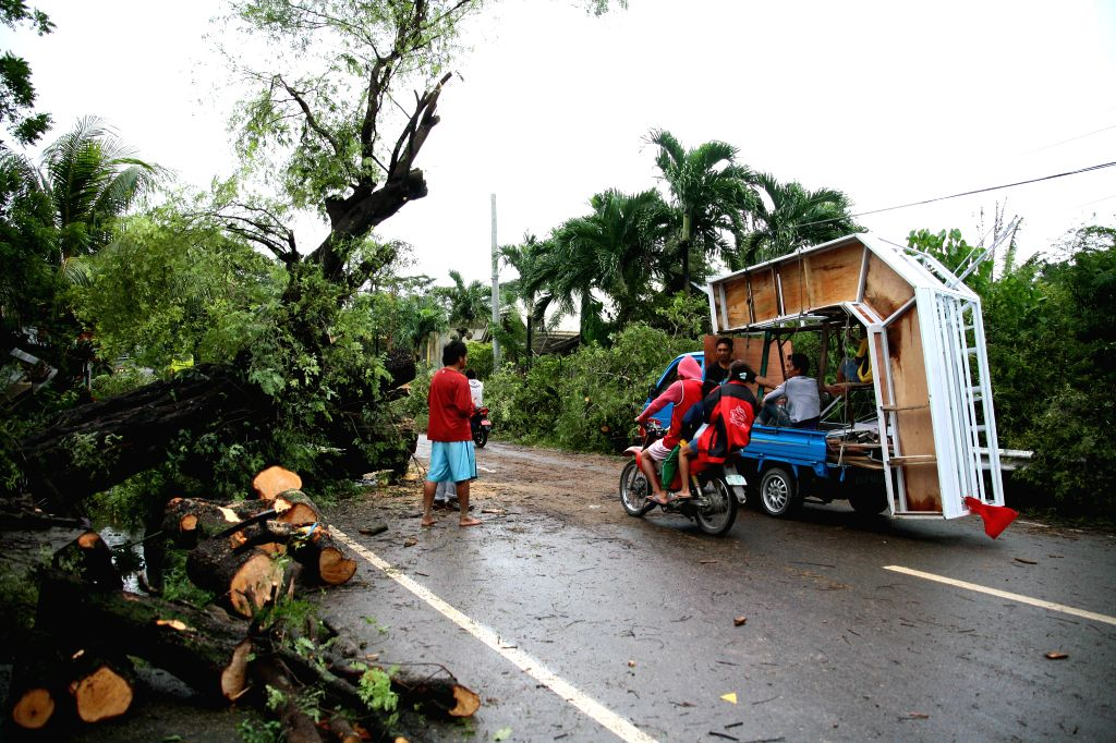 Residents pass through a road with a fallen tree on it in Cebu Province, the Philippines, Dec. 30, 2014. At least six people died in flood-triggered incidents and ...