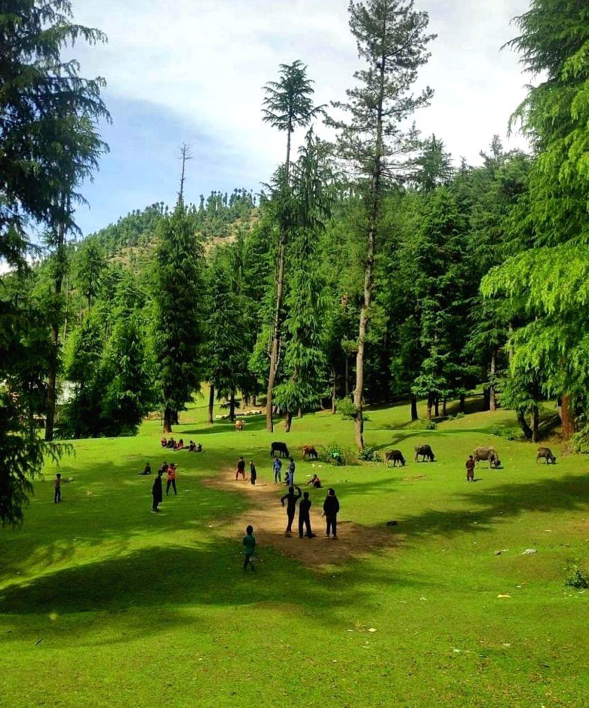 Chashme Shahi in Srinagar as record high temperatures seen.(photo:Twitter)