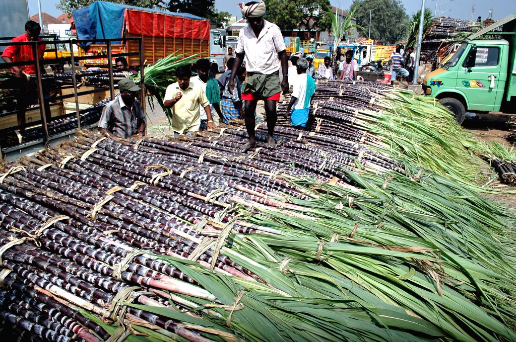 Chennai, May 8 (IANS) The Koyambedu wholesale market coronavirus cluster continued its major contribution to increase the number of new infections in Tamil Nadu as 600 persons tested positive for the virus over the past 24 hours, as per the state Hea
