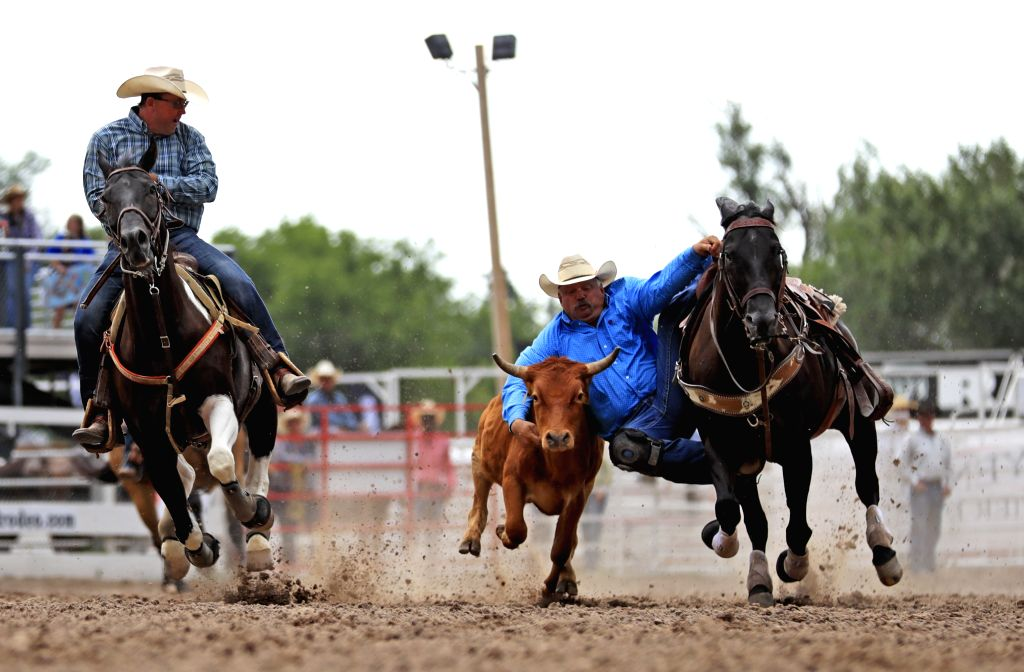 CHEYENNE, July 25, 2019 - A rider competes during the tie down roping event at the Cheyenne Frontier Days Rodeo in Cheyenne, the United States, July 24, 2019.