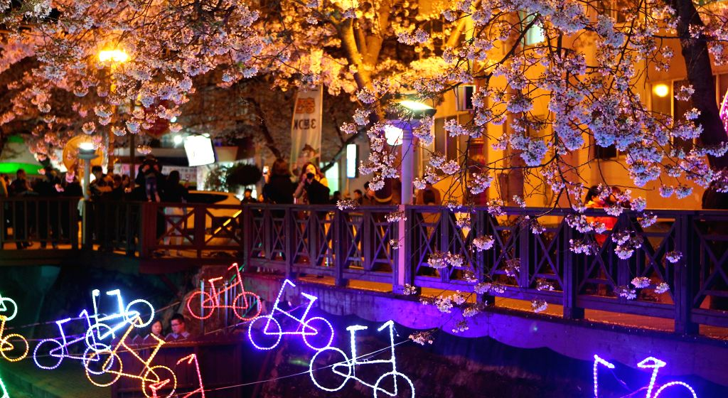 People stroll under illuminated cherry blossom trees during Chinhae Cherry Blossom Festival in Chang Won, southern city of South Korea, on April 7, 2015. The Chinhae ...