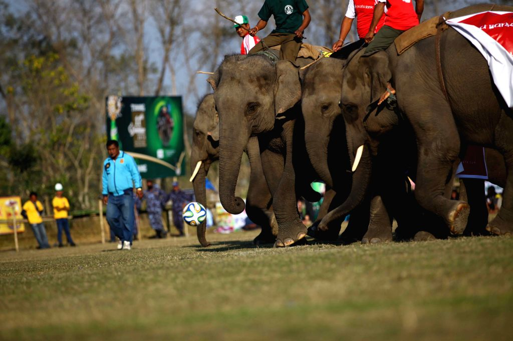 Elephants of Prabhu Bank elephant football team and Choudhary Group elephant football team play football during the 11th Elephant Festival which was organized by ...
