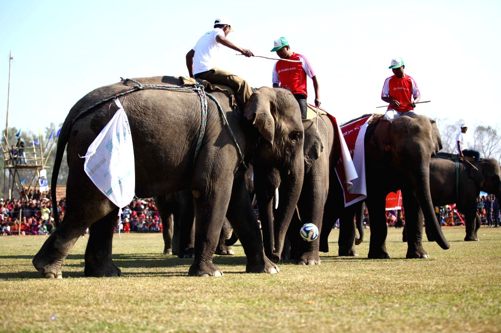 Two elephant football teams play in the final match during the 11th Elephant Festival at Sauraha in Chitwan, Nepal, Dec. 30, 2014. (Xinhua/Pratap Thapa)