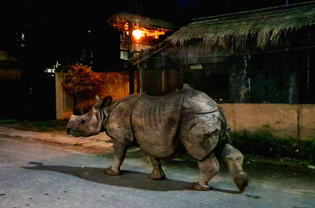 CHITWAN, July 12, 2018 - A one-horned rhino walks on the street of Sauraha, a tourism hub in southwest Nepal's Chitwan district, on July 11, 2018.
