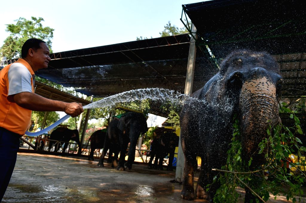 CHONBURI, March 2, 2017 - A mahout helps an Asian elephant take a shower at a zoo in central Thailand's Chonburi Province, March 1, 2017. In Thailand, elephant-related entertainments serve as an ...