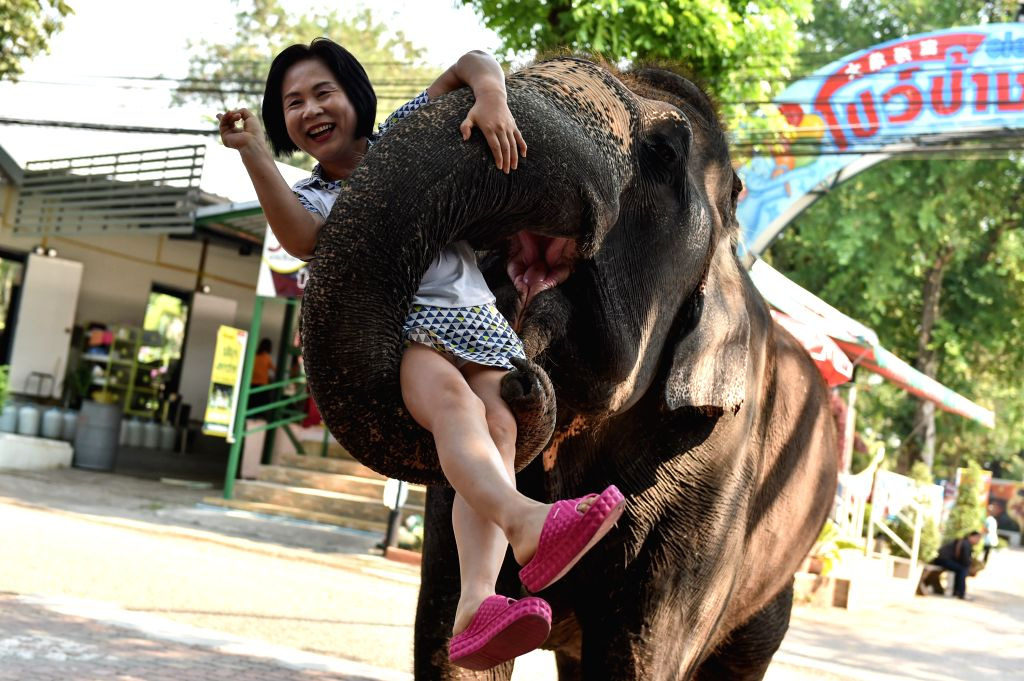 CHONBURI, March 2, 2017 - An Asian elephant holds up a tourist with its trunk at a zoo in central Thailand's Chonburi Province, March 1, 2017. In Thailand, elephant-related entertainments serve as an ...
