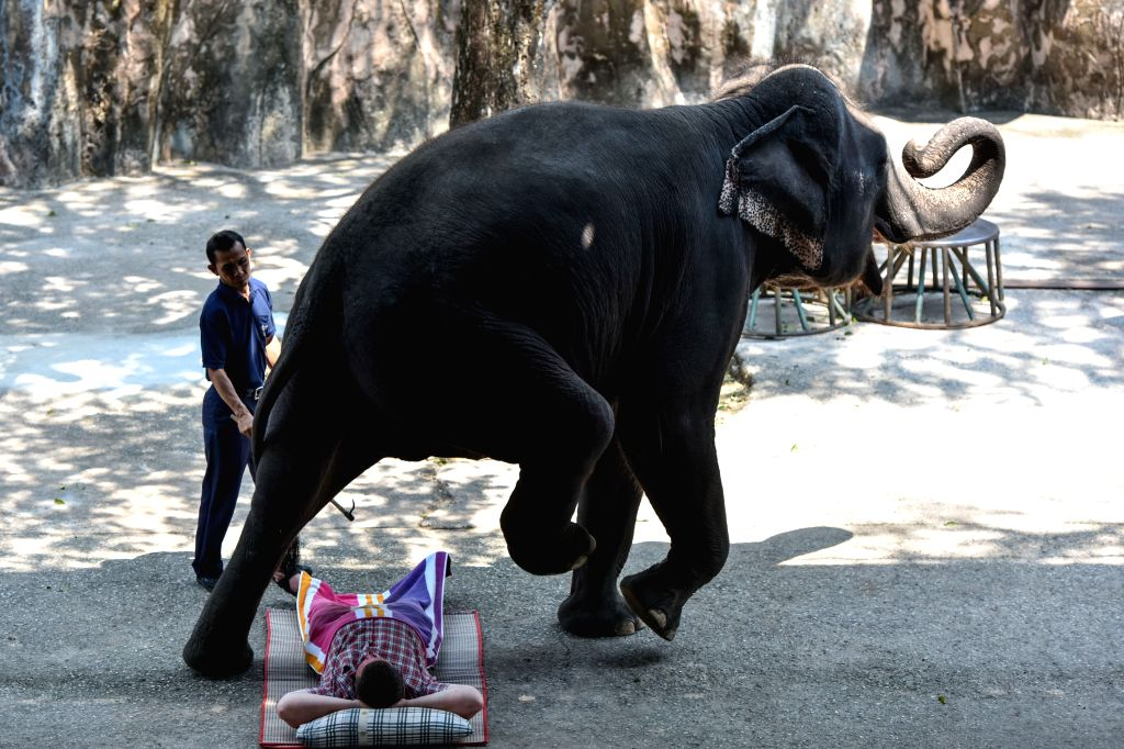 CHONBURI, March 2, 2017 - An Asian elephant walks across a tourist during an elephant show at a zoo in central Thailand's Chonburi Province, March 1, 2017. In Thailand, elephant-related ...