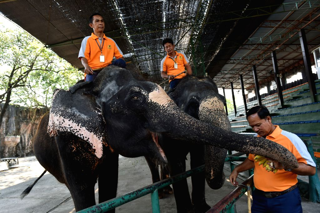 CHONBURI, March 2, 2017 - Mahouts interact with Asian elephants at a zoo in central Thailand's Chonburi Province, March 1, 2017. In Thailand, elephant-related entertainments serve as an important ...