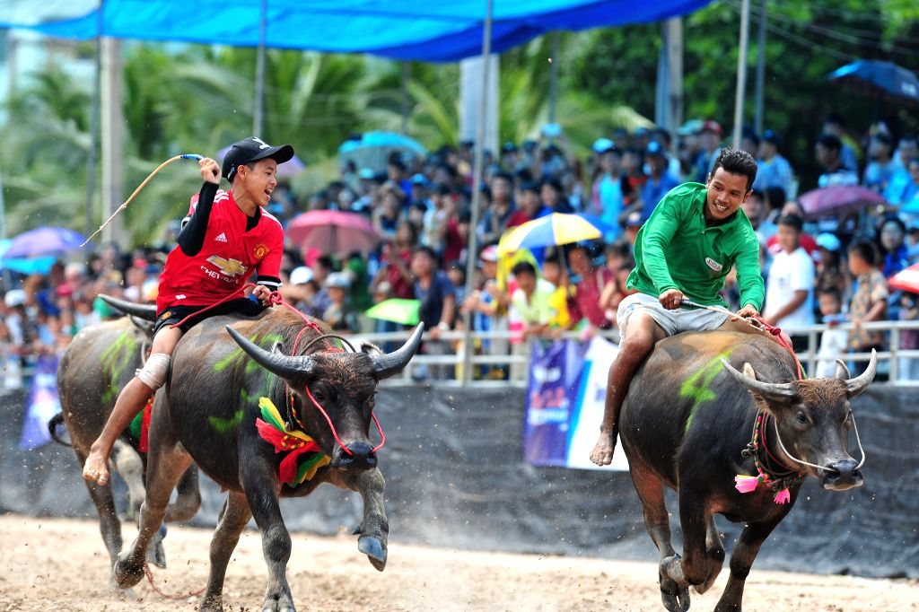CHONBURI, Oct. 24, 2018 - Racers compete during the buffalo racing in Chonburi, Thailand, Oct. 23, 2018. Hundreds of buffaloes took part in the centuries-old buffalo racing festival held annually in ...