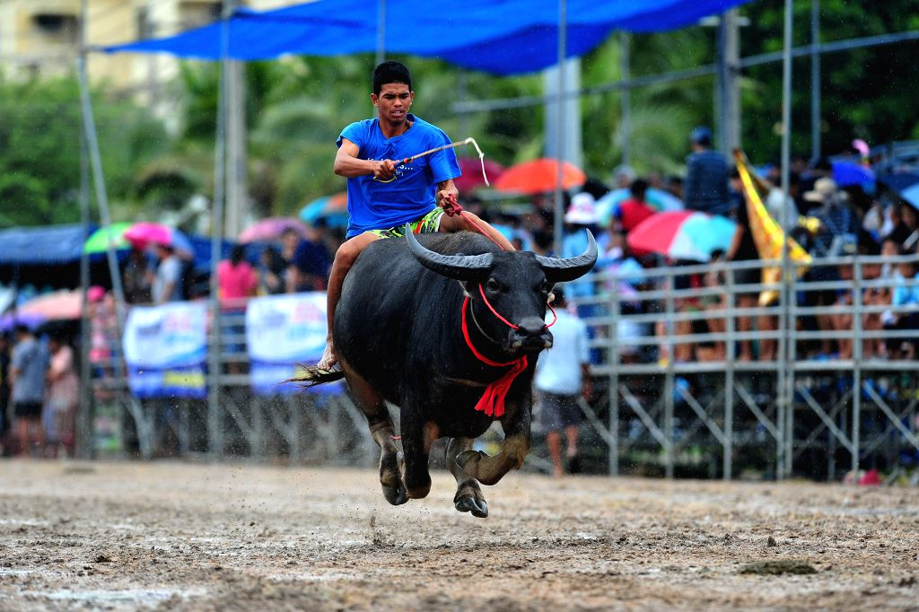 CHONBURI, Oct. 4, 2017 - A racer competes during an annual buffalo racing in Chonburi, Thailand, Oct. 4, 2017.