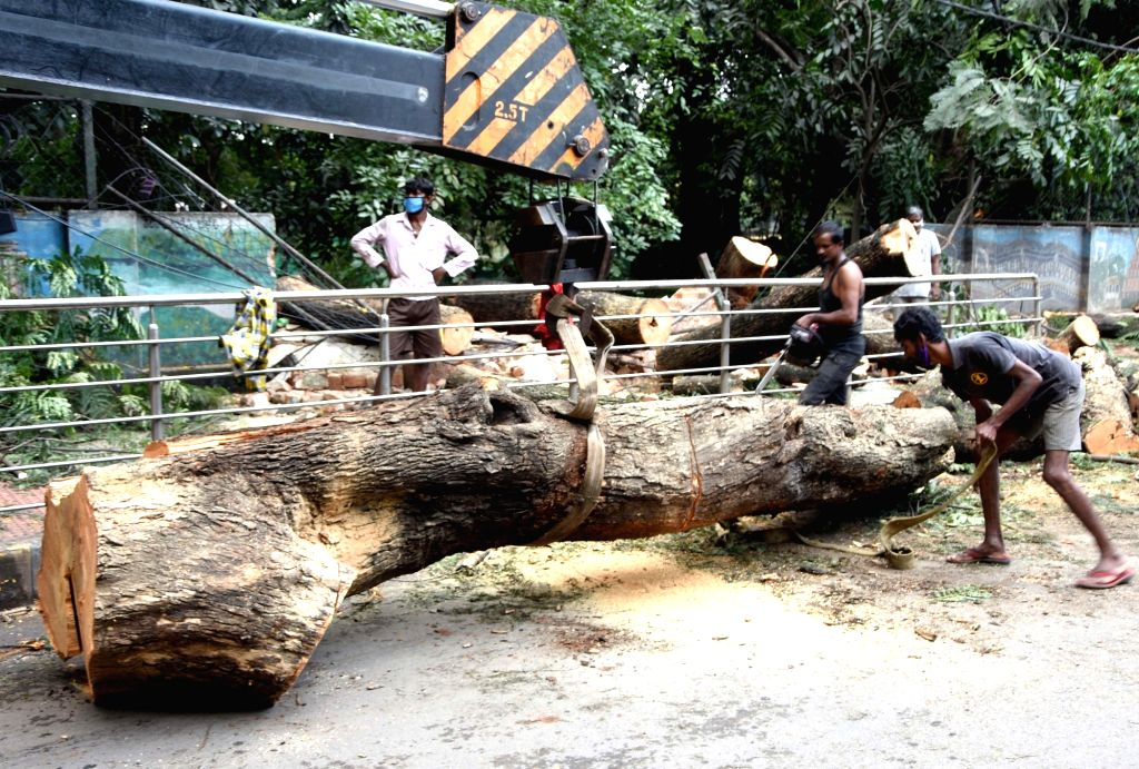 Clearance and restoration work underway after trees got uprooted during heavy rains last night in Bengaluru on Aug 31, 2020.