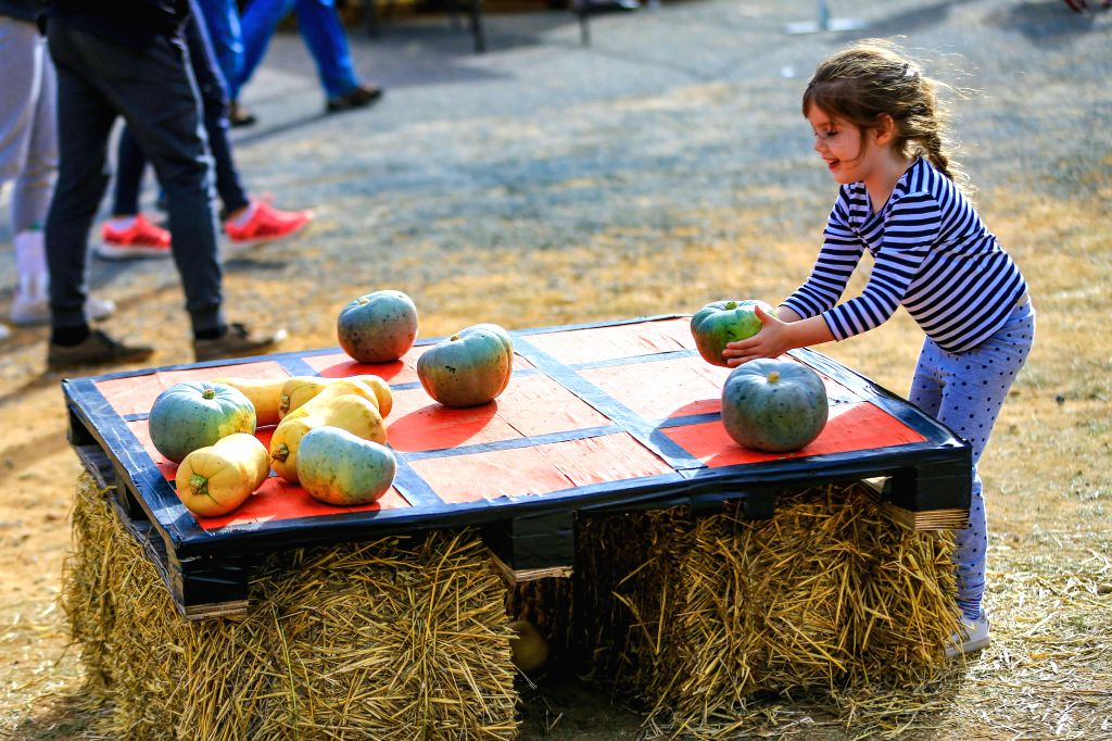 COLLECTOR, May 6, 2019 - A girl plays Tic-Tac-Toe with pumpkins on Pumpkin Festival in Collector, half an hour's drive from Australian capital Canberra, on May 5, 2019. The Collector Village Pumpkin ...