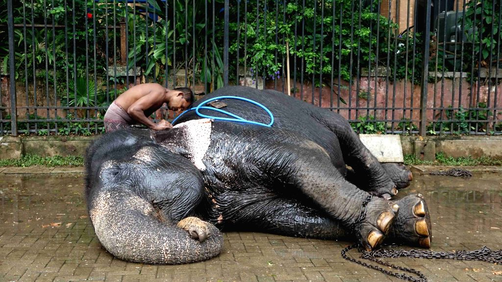 COLOMBO, Aug. 13, 2019 - A mahout bathes an elephant ahead of the Esala Perahera festival in Kandy, Sri Lanka, on Aug. 13, 2019. The festival features Kandyan dancers, fire twirlers, traditional ...