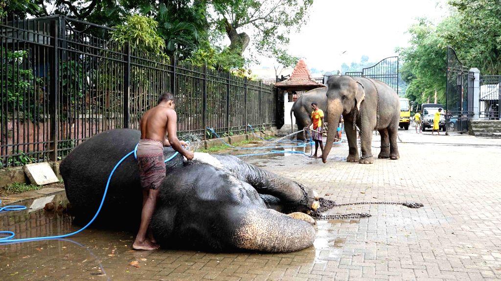 COLOMBO, Aug. 13, 2019 - Mahouts bathe elephants ahead of the Esala Perahera festival in Kandy, Sri Lanka, on Aug. 13, 2019. The festival features Kandyan dancers, fire twirlers, traditional ...