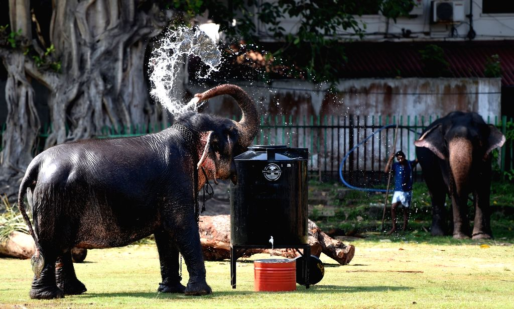 COLOMBO, Feb. 18, 2019 - An elephant sprays water over itself in Colombo, Sri Lanka, on Feb. 18, 2019. Dozens of elephants gathered here to take part in the annual Buddhist Navam procession at the ...