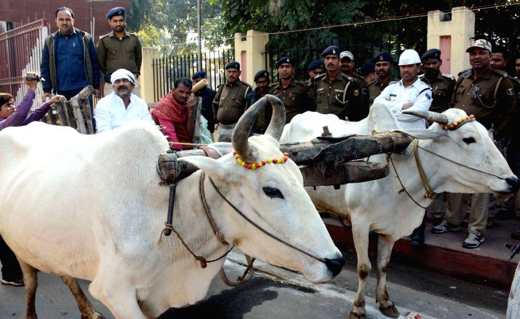 Congress MLA Amit Kumar Tunna arrives at Bihar Assembly on a bullock cart in Patna on Feb 11, 2019. - Amit Kumar Tunna