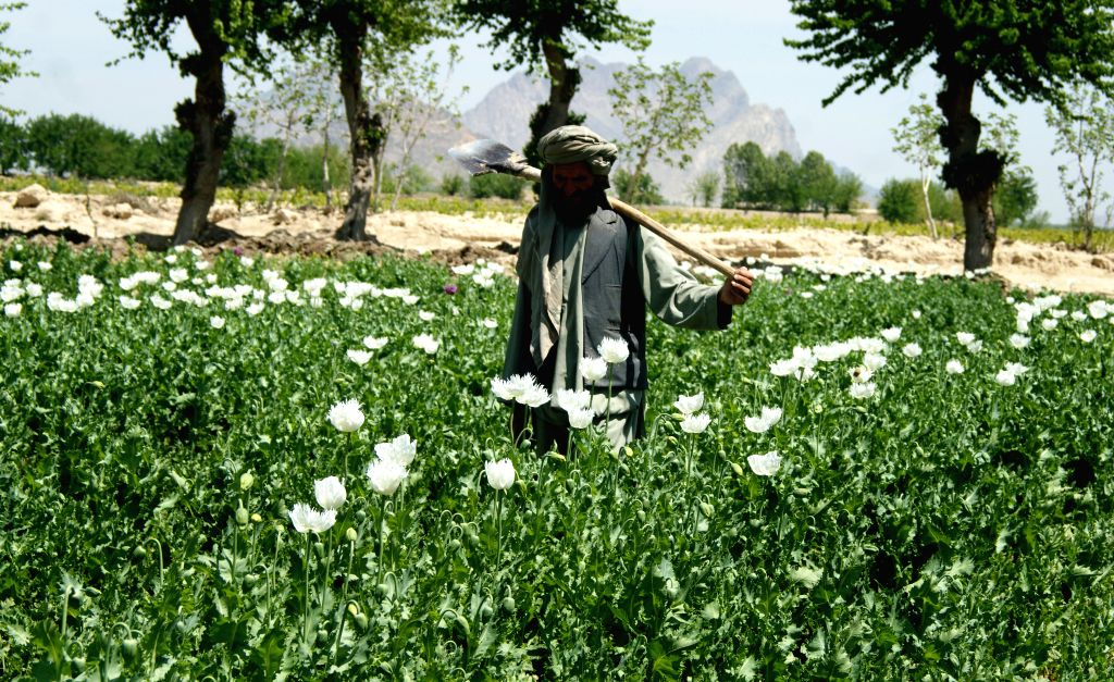 Contrary to Taliban claims, Afghanistan remains world's biggest opiate supplier