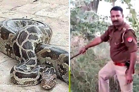 Cop who is a snake catcher too.