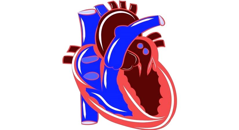 COVID-19 survivors are returning to hospitals with reduced heart functions. (Photo: Pixabay)