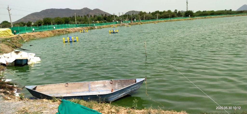 Covid wreaks havoc with Godavari region aquaculture farmers Covid wreaks havoc with Godavari region aquaculture farmers.