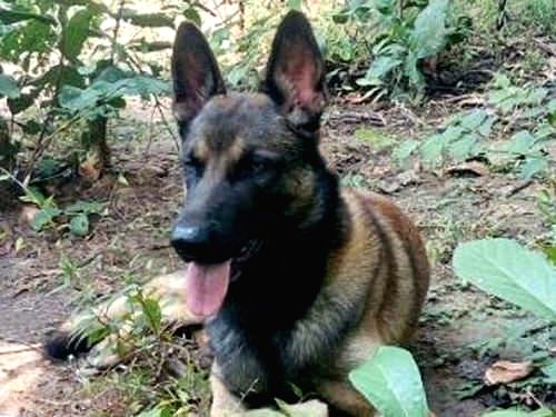 Cracker', who saved 45 CRPF men in 2017, gets special mention by PM.
