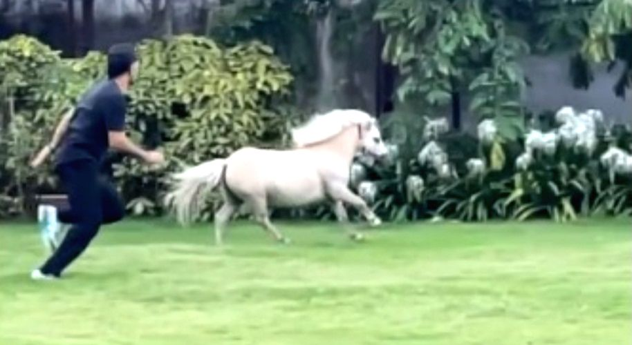 CSK skipper Dhoni 'tests his fitness' with a Shetland pony.