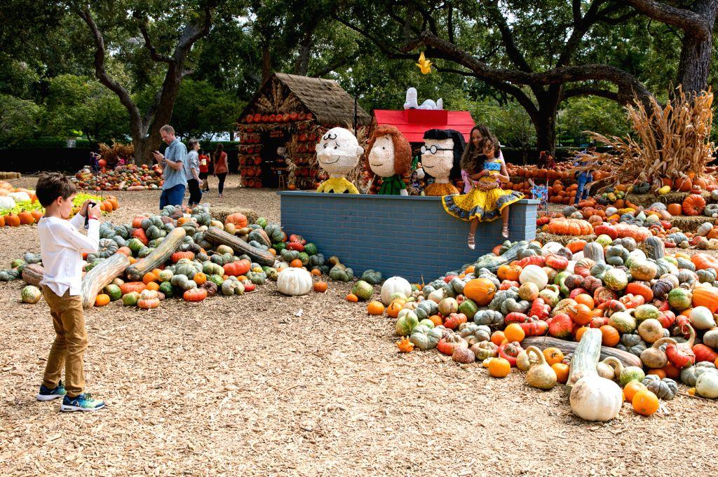 DALLAS, Oct. 11, 2019 - A boy takes photos in Dallas Arboretum's Pumpkin Village, Texas, the United States, Oct 10, 2019. The Dallas Arboretum's Pumpkin Village features pumpkin houses and creative ...