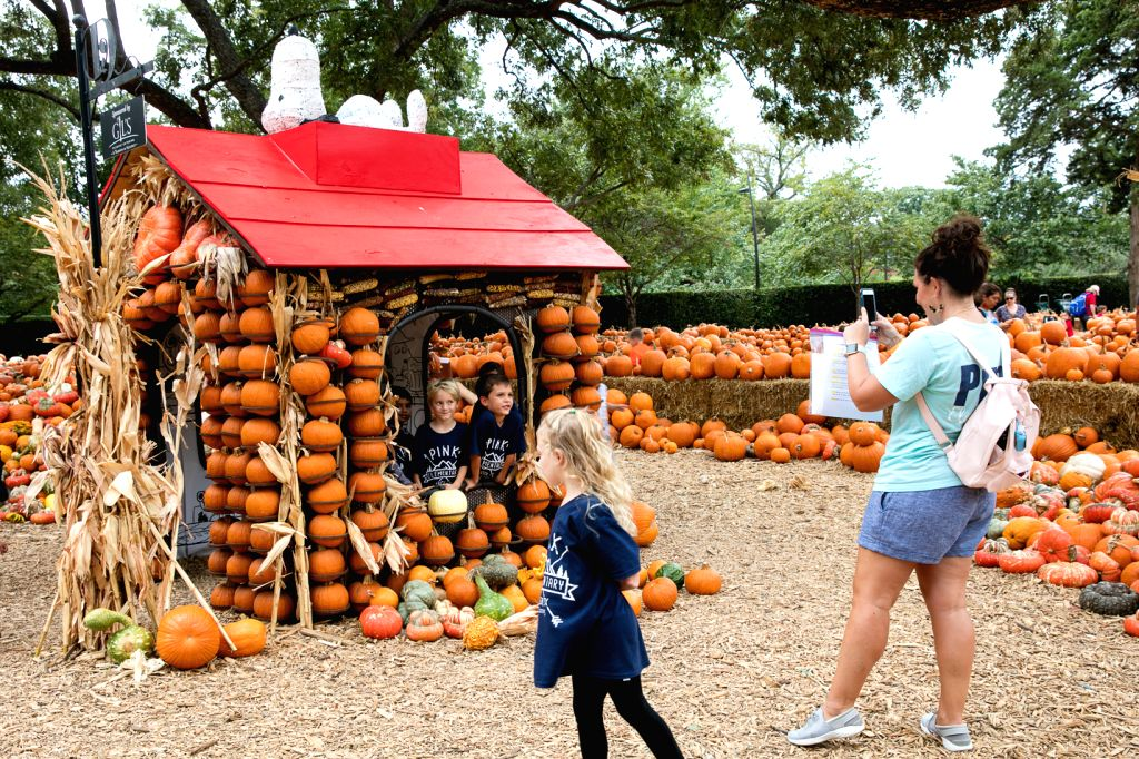 DALLAS, Oct. 11, 2019 - A lady takes photos in front of a pumpkin house at the Dallas Arboretum's Pumpkin Village, Texas, the United States, Oct 10, 2019. The Dallas Arboretum's Pumpkin Village ...