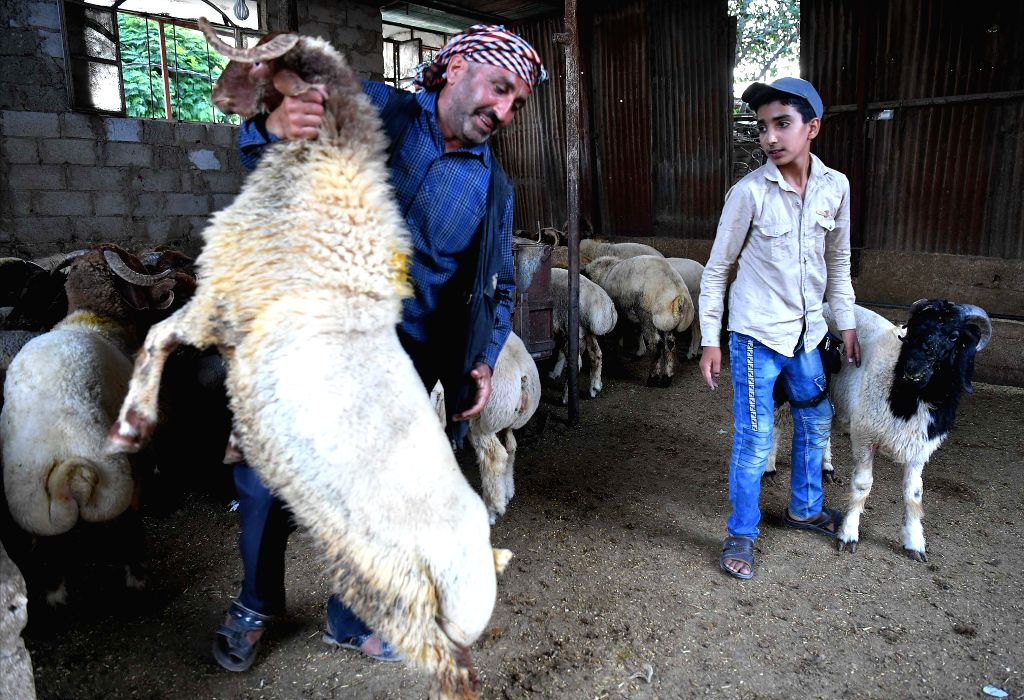 DAMASCUS, Aug. 9, 2019 - A sheep vendor holds a sheep at a livestock market in Damascus, Syria, ahead of the Eid al-Adha feast, on Aug. 9, 2019.