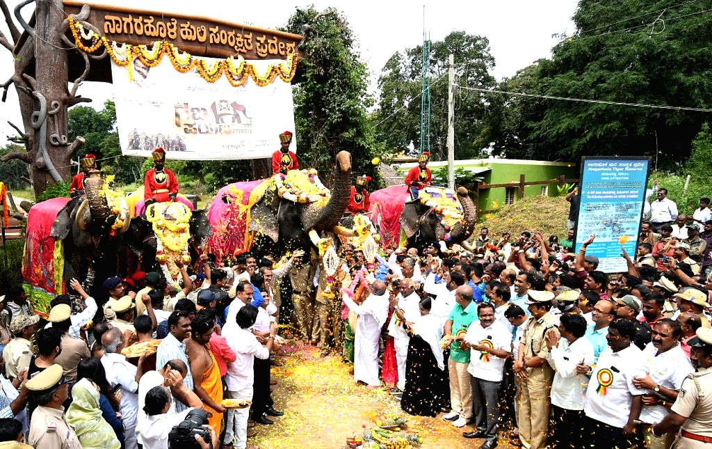 """Dasara elephants are being readied for the """"Gajapayana"""", the march of the elephants from their respective forest camps to Mysuru city, at Hunsur Taluka of Karnataka's Mysuru ..."""
