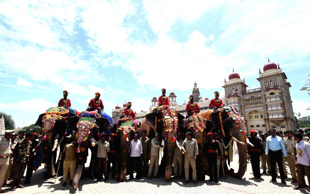 Dasara elephants arrive at Mysuru Palace for Dasara celebrations, in Bengaluru on Aug 26, 2019.