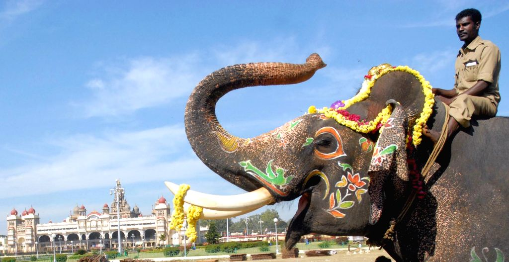 Dasara elephants receive a hearty farewell at Mysuru Palace after Dussehra on Oct 25, 2015.