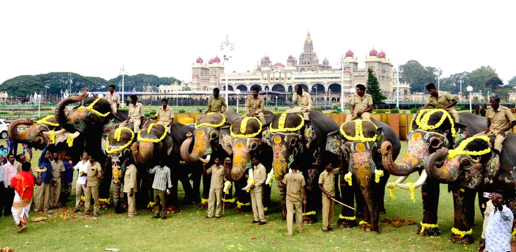 Dasara elephants receive grand farewell at Mysuru Palace after the conclusion of Dussehra celebrations, in Mysuru on Oct 10, 2019.