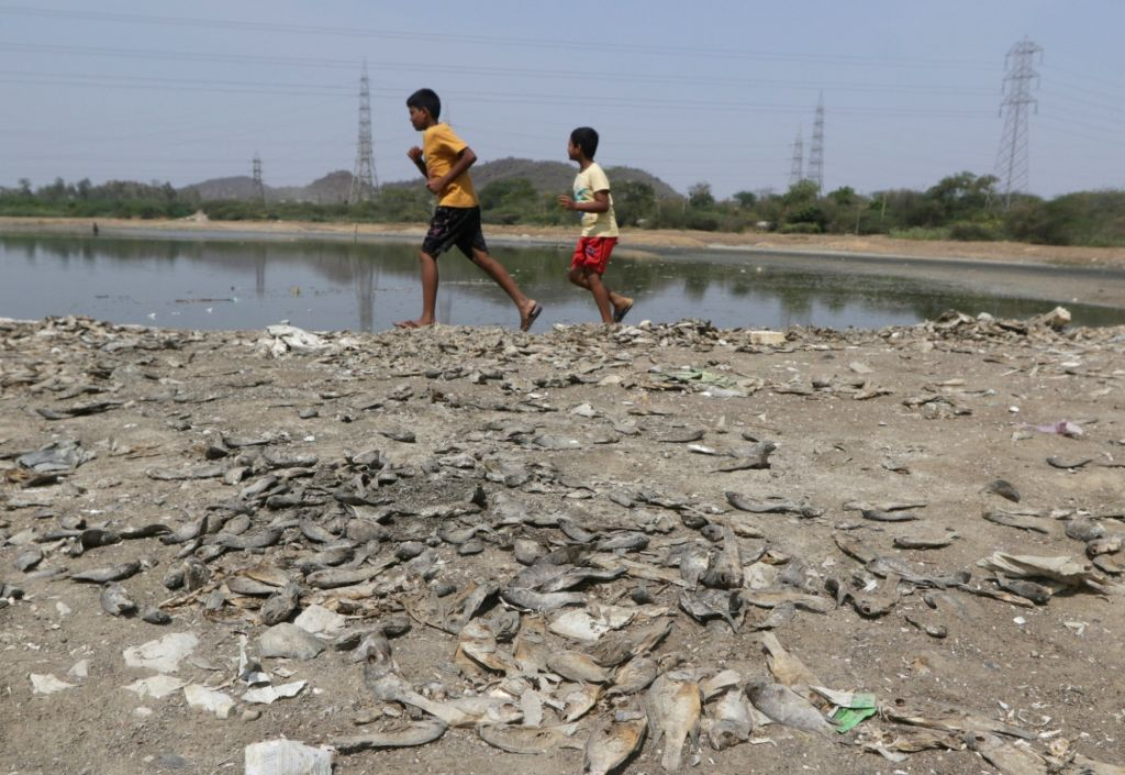 Dead fish seen on the shore after a lake dried up due to rising temperature, in Chennai on June 9, 2019.
