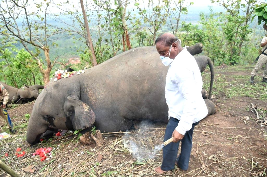 Death of 18 elephants in Assam due to 'lightning' : Govt Probe panel.