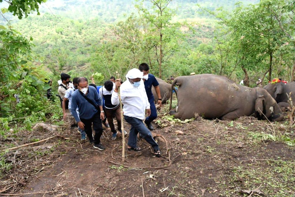Death of 18 elephants in Assam ???mysterious??? says experts, demands in depth probe.