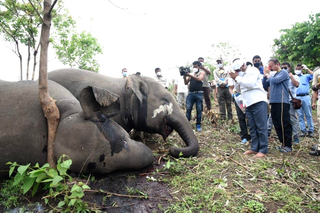 """Death of 18 elephants in Assam """"mysterious"""" says experts, demands in depth probe."""