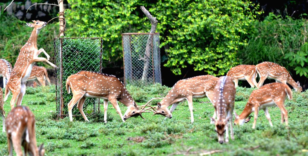 Deer at Assam State Zoo in Guwahati on Sept 11, 2014. (Photo: IANS