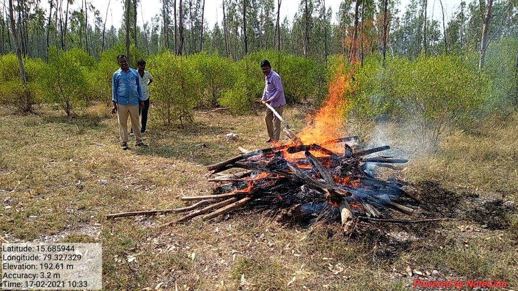 Deer dies after its head gets stuck in iron gate in Andhra