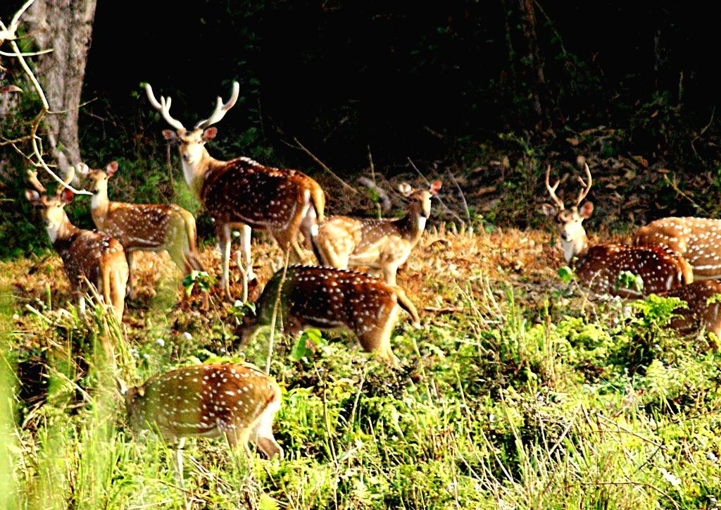 Deer playing at the Grumara National Park in West Bengal`s Jalpaiguri district. The park was declared the best among the protected areas in India by the Ministry of Environment and Forests for the year 2009. (Photo: IANS)