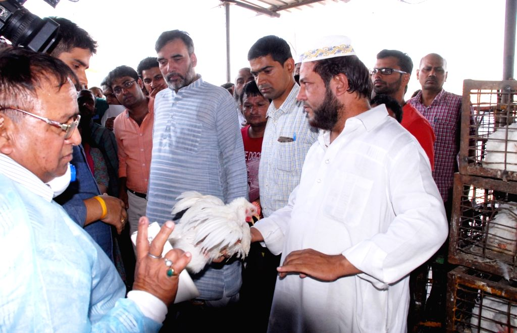 Delhi Animal Husbandry Minister Gopal Rai visits Ghazipur chicken mandi (market) to take stock of the situation after several migratory birds were found dead in various parts of Delhi over ... - Gopal Rai