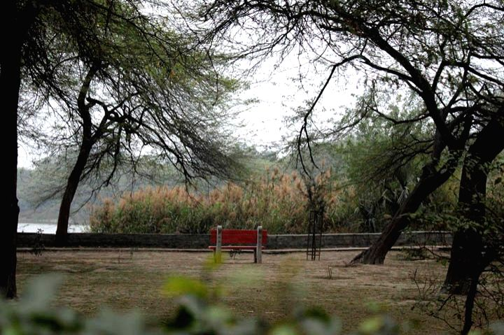 Delhi has a large number of green areas accessible to its people (Photograph: Rahul Kumar) - Rahul Kumar
