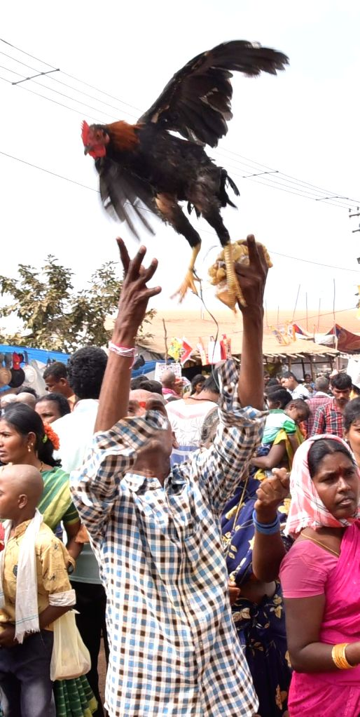 Devotees Devotees flying Hen offered prayers at Sammakka Saralamma Jatara at Medaram, Mulugu District, in Telangana on Feb 7, 2020.