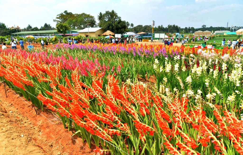 Different varieties of flowers seen during National Horticulture Fair 2020 organised by Indian Institute of Horticultural Research, in Bengaluru on Feb 6, 2020.