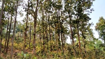 Diluting for development, proposed Forest Act amendment estranged from environment